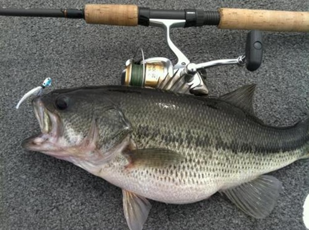 Regular and pro anglers are welcome at the table rock lake for Missouri bass fishing